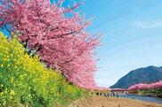 河津川沿桜並木