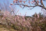 青島自然休養村