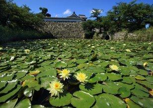 花と緑のまちかど写真コンテスト入賞作品展