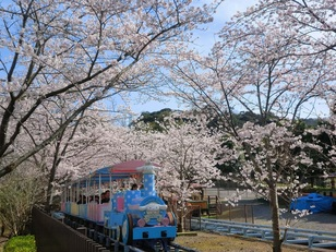 【桜・見頃】ハーモニーランド