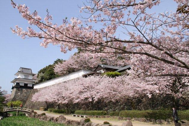 大村公園(二重馬場)の桜