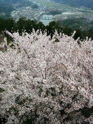 冨士山公園
