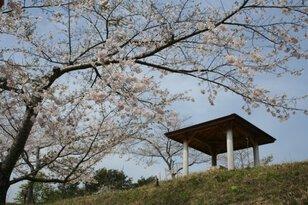 【桜・見ごろ】ハイカラ山