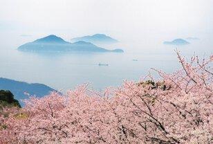 【桜・見ごろ】紫雲出山