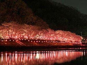 井原桜まつり(井原堤会場)