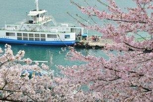 【桜・見ごろ】兼吉の丘