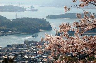 【桜・見ごろ】因島公園