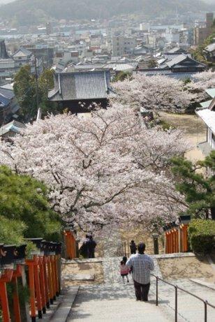 【桜・見ごろ】西國寺