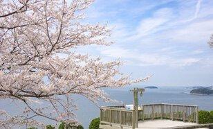 【桜・見ごろ】西浦園地(蒲郡市)