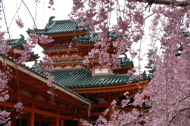 平安神宮 神苑の桜