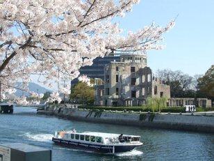 【桜・見ごろ】平和記念公園