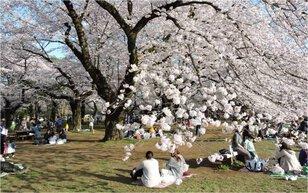 第8回桜ウォーキングと桜守学校