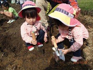 淡路島国営明石海峡公園 チューリップの球根掘り体験