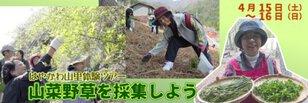 はやかわ山里体験ツアー 山菜野草を採集しよう