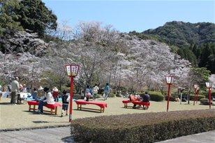 孔子の里 桜まつり