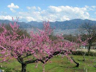 桃源郷に包まれた天空のはたけで野外茶道体験&MY味噌作り教室