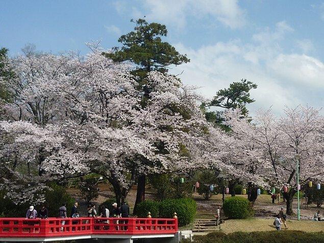 【桜・見頃】岩槻城址公園