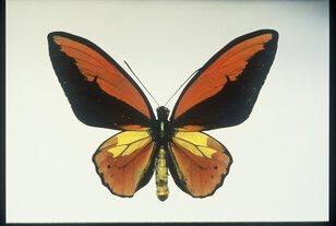 昆虫わくわく探検館~小さな生き物の大きなひみつ~