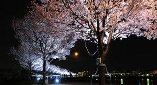 2017 桜まつり 春