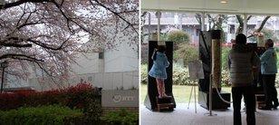 武蔵野桜まつり「NTT技術史料館特別公開」