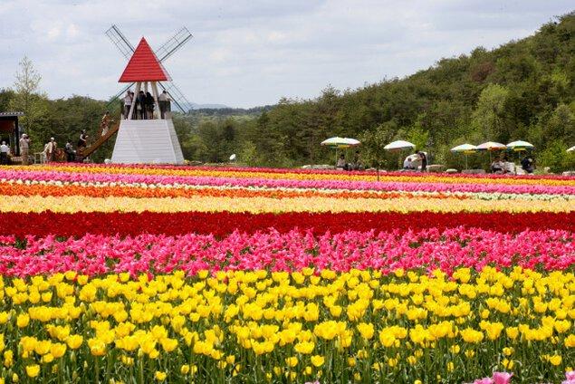 世羅高原農場 チューリップ祭