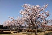 甲賀市水口スポーツの森