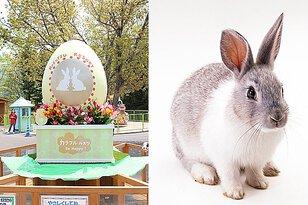 カラフル・ルスツ ふわふわウサギふれあい広場デコレーション
