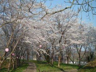 村田町城山公園 桜まつり
