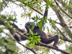 キュレーターズガイド「テナガザルの森を歩く」