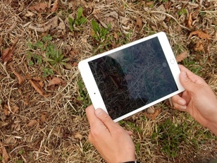 ソフトバンク自然教室「家族で楽しむ春の五感探検隊」