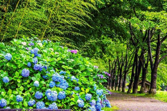 初夏の花物語