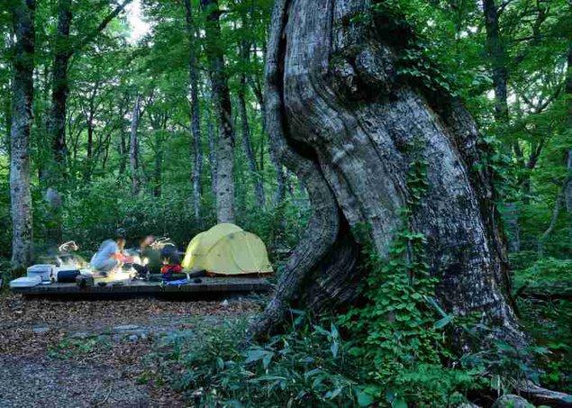 【2018年は県道白山公園線の復旧工事に伴う全面通行止めのため営業休止】白山ブナの森キャンプ場