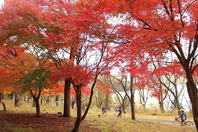 八千代湖(士師ダム)
