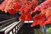 須賀川牡丹園