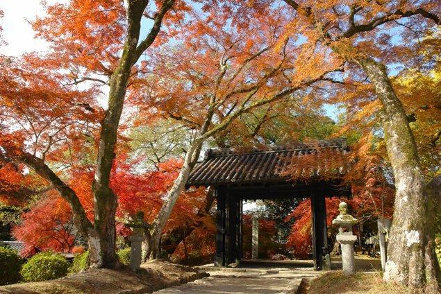 秋月城跡周辺の紅葉