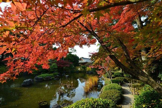 城南宮 神苑 楽水苑の紅葉