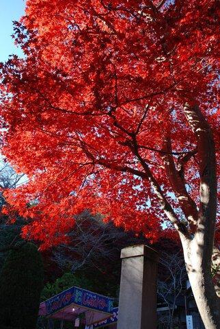 東郷公園の紅葉