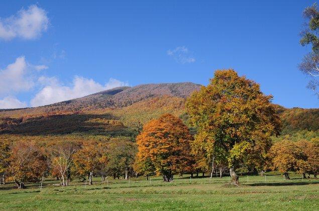 笹ヶ峰高原の紅葉