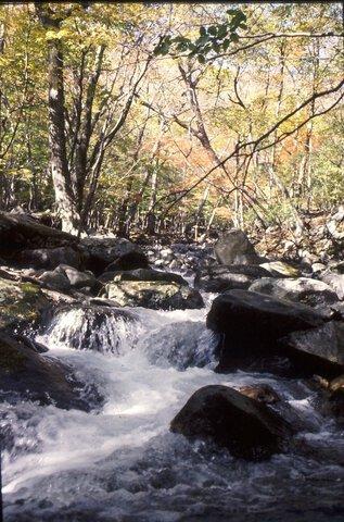 大沢渓谷の紅葉