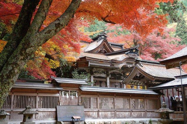 大矢田神社もみじ谷の紅葉