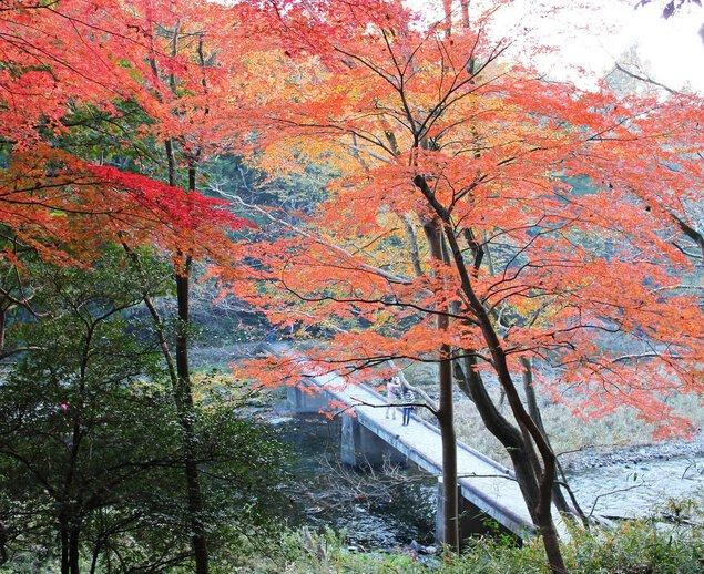 嵐山渓谷の紅葉