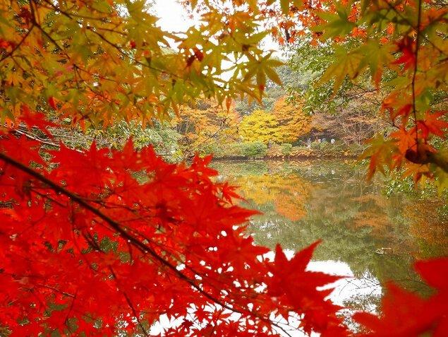 白馬渓の紅葉
