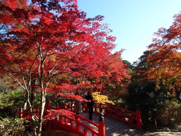 第32回熱海梅園もみじまつりの紅葉