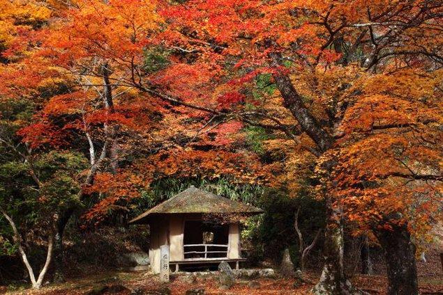 吉野山(奥千本)の紅葉