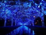 渋谷公園通りから代々木公園ケヤキ並木