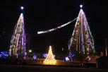 クリスマスツリーと街路樹のライトアップ