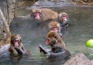 智光山公園こども動物園 どうぶつ温泉