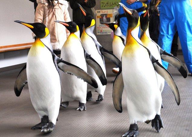 冬季限定!!「ペンギンパレード」