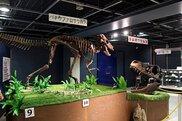 第71回特別展「恐竜と化石の切手展」