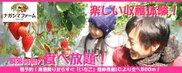 ナガシマファーム いちご収穫体験